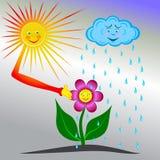 Rain+sun=flower Stock Photos