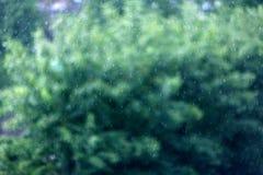 Rain texture leaves green blur Stock Photos