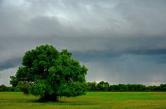 Rain and tree. Landscape with a cloudy sky and storm clouds on a field royalty free stock photography