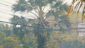Rain is in a tropical country. Downpour on the street. Rain in a tropical country. Downpour on the street stock footage