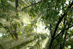 Rain in a tropical forest Stock Images