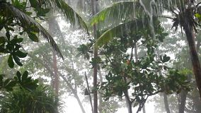 Rain in tropical garden stock video