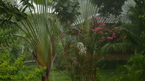 Rain in a tropical garden. The trees sway the wind and rain stock footage