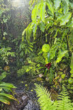 Rain in tropical rainforest background Stock Images