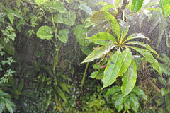 Rain in tropical rainforest background Royalty Free Stock Photos