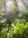 Rain in tropical rainforest Royalty Free Stock Images
