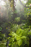 Rain in tropical rainforest Stock Images