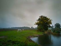 In rain royalty free stock photo