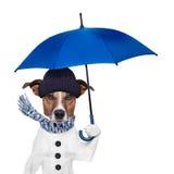 Rain umbrella dog. Rain umbrella winter dog cold Stock Images