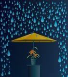 Rain umbrella. Stock Photos
