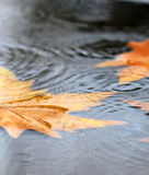 Rain Royalty Free Stock Images