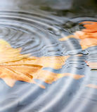 Rain. Very bright and colorful autumn background stock photography