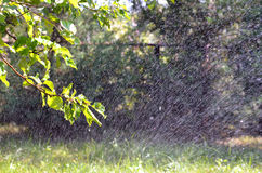Grass spray watering in the garden  Stock Photography