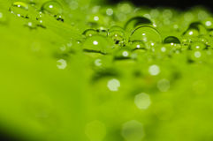 Rain water drop on green leaf Stock Image