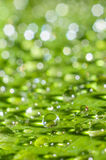 Rain water drop on green leaf Stock Photography