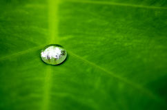 Rain water drop on a green leaf. Single shiny, reflective rain water drop on a vivid green leaf royalty free stock photography