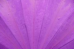 Rain water drop on purple umbrella background with copy space for add text.  Royalty Free Stock Image
