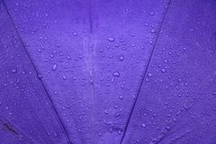 Rain water drop on purple umbrella background with copy space. For add text Stock Photo