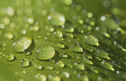 Rain water drop on tent Royalty Free Stock Photo