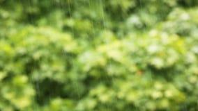 Rain Water drop. Video stock footage