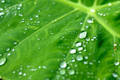 Rain water droplets on leaf Royalty Free Stock Photo