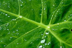 Rain water droplets on leaf Royalty Free Stock Photos