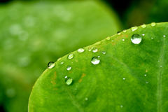 Rain water droplets on leaf Royalty Free Stock Images