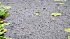 Rain water drops falling into lake in summer, slow motion in 180 fps, heavy rain close up view.  stock video