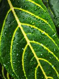 After rain. Water drops on leaves after rain Royalty Free Stock Images