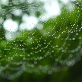 Rain water drops on spider web abstract.  Stock Images