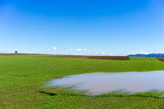 Rain water in front of green field with wheat and bright blue sk Royalty Free Stock Photography