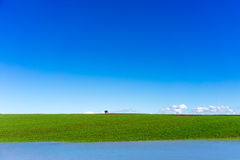Rain water in front of green field with wheat and bright blue sk Royalty Free Stock Photo
