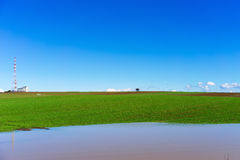 Rain water in front of green field with wheat and bright blue sk Stock Photos