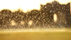 Rain water in the garden stock footage