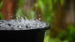 Rain water pouring in black basin with green garden stock video footage