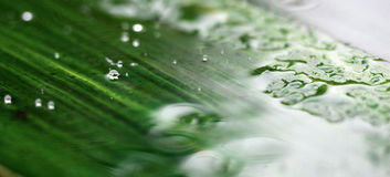 Rain or waterdrops.season concept. Picture of a rain or waterdrops.season concept stock photography