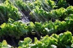 Rain waters on organic food Royalty Free Stock Photo