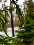 Rain in winter stock image