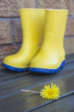 Rainboots和蒲公英 库存照片