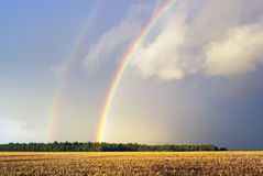 Rainbow. Over a field of rye garnished. Autumn rain Royalty Free Stock Images