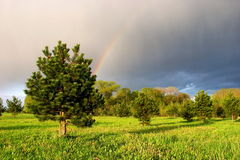 Rainbow. At the green field with tree and blue sky stock images