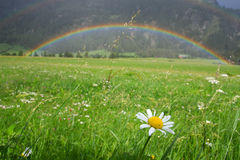 Rainbow. Over a nice green field Royalty Free Stock Image
