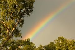 Rainbow. A rainbow can be seen in amongst the gum trees with the pretty light of the sun lighting up the leaves and trunk of the gum trees to give them a very Stock Photo