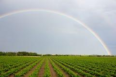 Rainbow. On the moody sky Royalty Free Stock Photo