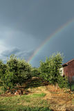Rainbow above fruit orchard Stock Photo