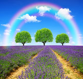 Rainbow above the lavender fields Stock Photography