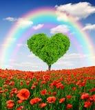 Rainbow above the poppy field. With tree from the shape heart Stock Photos