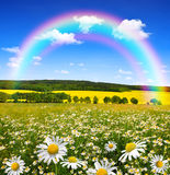 Rainbow above the spring landscape. With field of marguerites Royalty Free Stock Photo