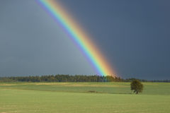 Rainbow above a tree. Rainbow over wood and lonely tree in the field Stock Images