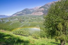 Rainbow above Watering with Sprinklers of Apple Tree Plantation, Italy. Europe Stock Photo